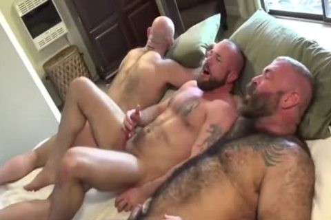 Three strong Bears plowing butthole